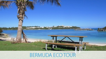 Coopers Island Eco-Tour - Bermuda Explorer