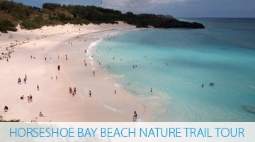 Horseshoe Bay Beach Nature Trail Tour - Bermuda Explorer